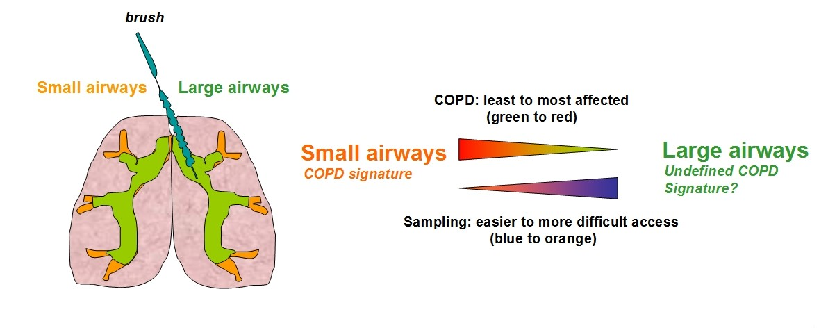 COPD_challenge_disease_tissues