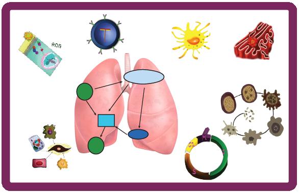 NVC1 lung biology